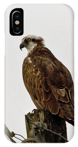 Ollie, The Osprey IPhone Case