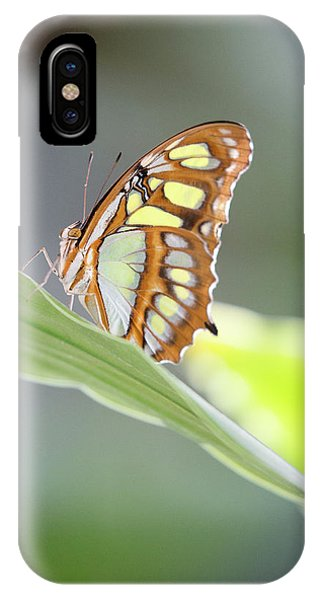 On A Leaf IPhone Case