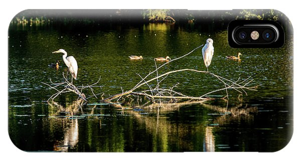 IPhone Case featuring the photograph One Legged Egrets by Onyonet  Photo Studios