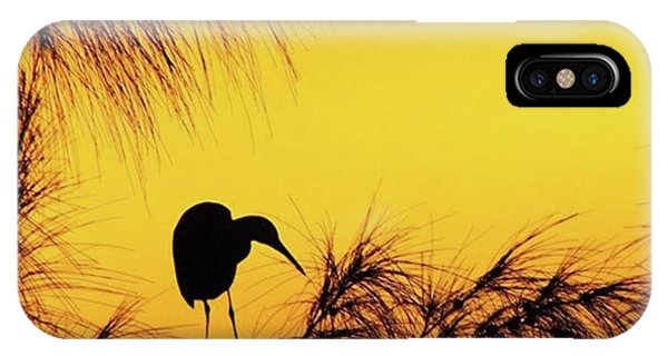 Animals iPhone Case - One Of A Series Taken At Mahoe Bay by John Edwards