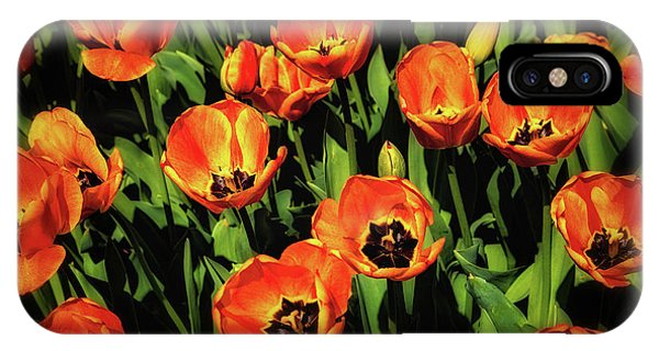 Tulip iPhone X Case - Open Wide - Tulips On Display by Tom Mc Nemar