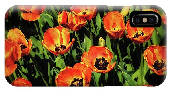 Tulip iPhone X / XS Case - Open Wide - Tulips On Display by Tom Mc Nemar