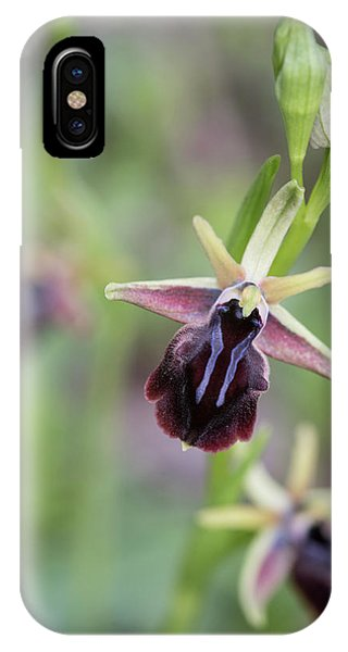 IPhone Case featuring the photograph Ophrys Mammosa Wild Orchid Plant Blooming Flower. by Michalakis Ppalis
