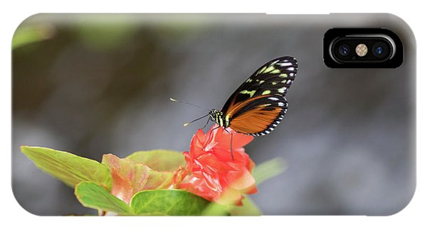 Orange And Black Butterfly IPhone Case