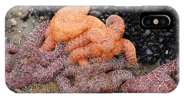 Orange And Purple Starfish IPhone Case