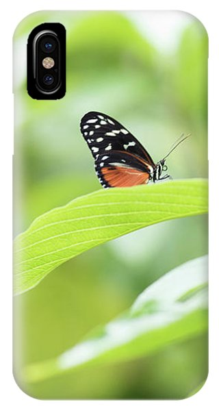 IPhone Case featuring the photograph Orange Black Butterfly by Raphael Lopez