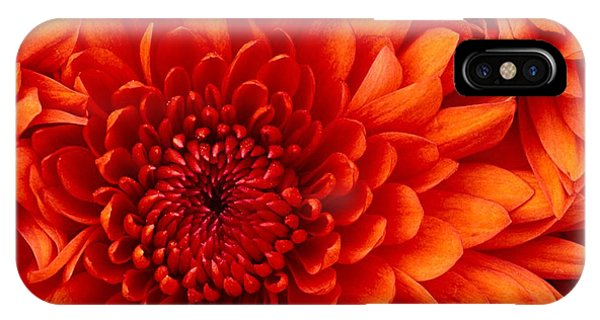 IPhone Case featuring the photograph Orange Bloom by Marian Palucci-Lonzetta