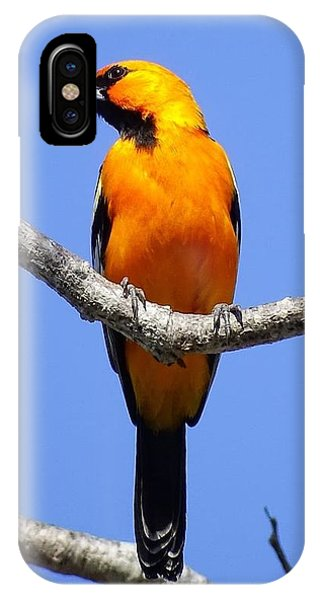 IPhone Case featuring the photograph Orange Breasted by Cindy Charles Ouellette