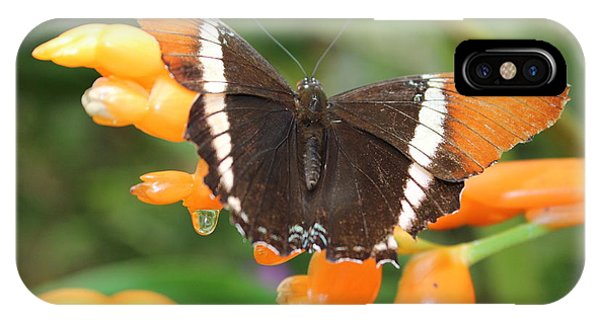 Orange Butterfly IPhone Case