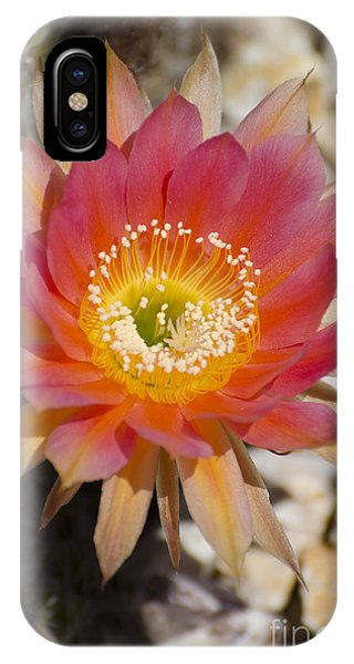 Orange Cactus Flower IPhone Case