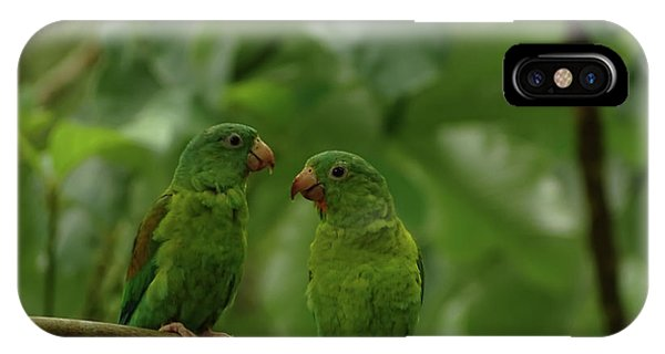Orange-chinned Parakeets-  IPhone Case