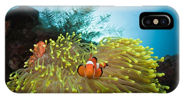 Orange Clownfish IPhone Case