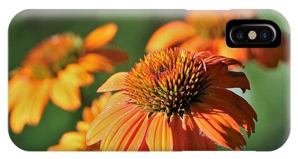 Orange Cone Flowers In Morning Light IPhone Case