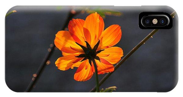 Orange Cosmo IPhone Case