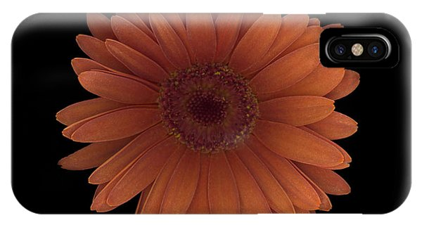 Orange Daisy Front IPhone Case