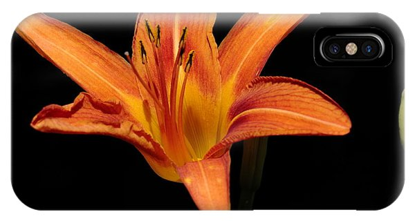 Orange Day-lily IPhone Case