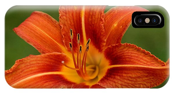 Orange Day Lily No.2 IPhone Case