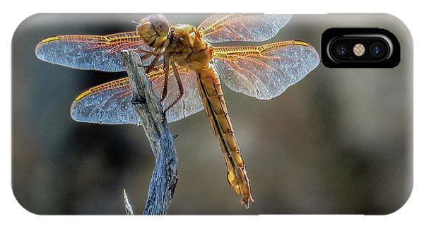 Dragonfly 6 IPhone Case