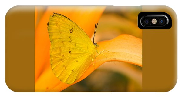 Orange Emigrant Butterfly IPhone Case