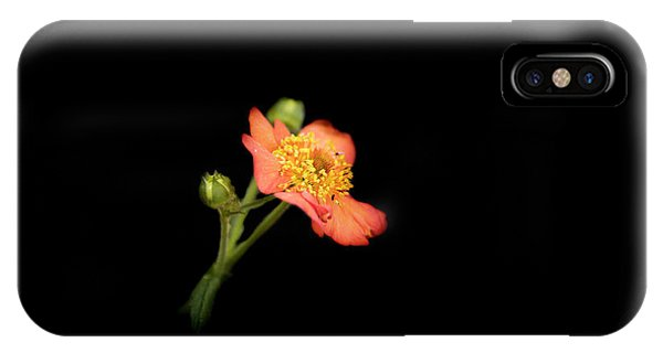 Orange Flowers In The Summer IPhone Case