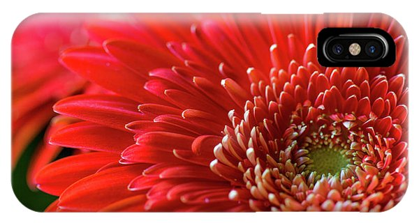 IPhone Case featuring the photograph Orange Gerbera by Clare Bambers