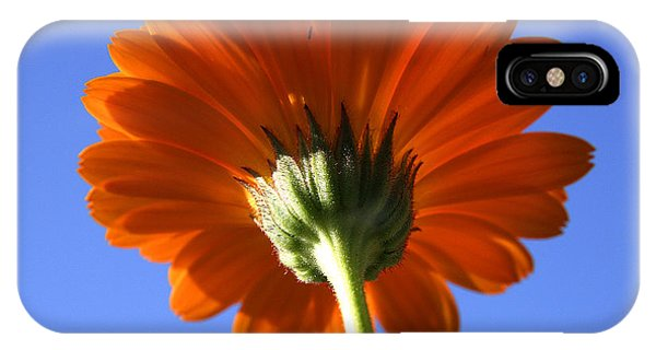 Orange Gerbera Flower IPhone Case