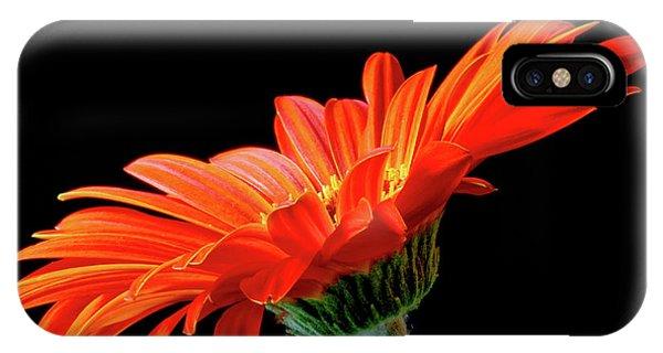 Orange Gerbera On Black IPhone Case