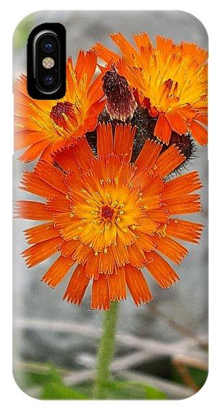 Orange Hawkweed IPhone Case