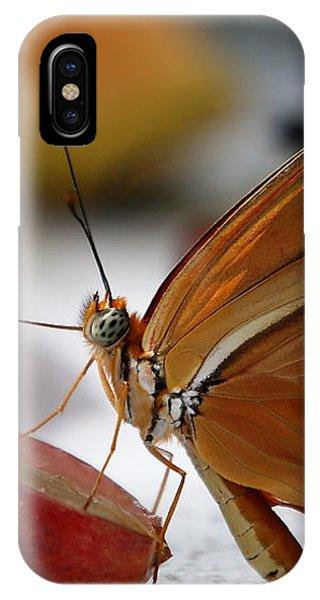 Orange Julia Butterfly IPhone Case