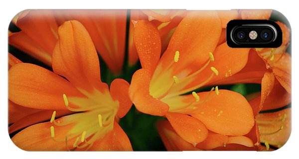Orange Lilies No. 1-1 IPhone Case