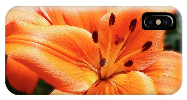Orange Lily Joy IPhone Case