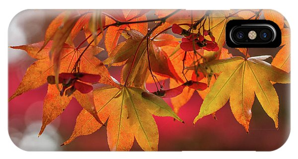 IPhone Case featuring the photograph Orange Maple Leaves by Clare Bambers
