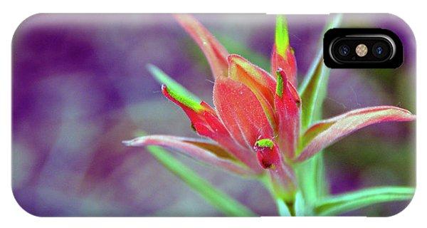 Orange Paintbrush Flower IPhone Case