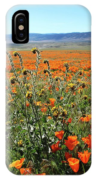 Floral iPhone Case - Orange Poppies And Fiddleneck- Art By Linda Woods by Linda Woods