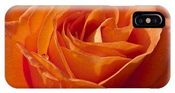 Orange Rose 2 IPhone Case
