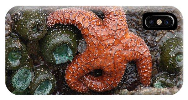 Orange Starfish And Anemonies IPhone Case