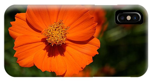 Orange Sulfur Cosmos Flower IPhone Case