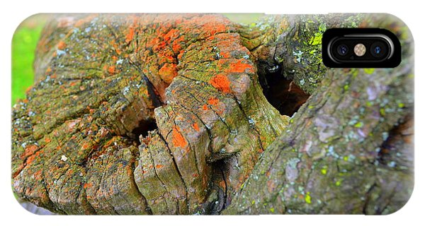 IPhone Case featuring the photograph Orange Tree Stump by Richard Ricci