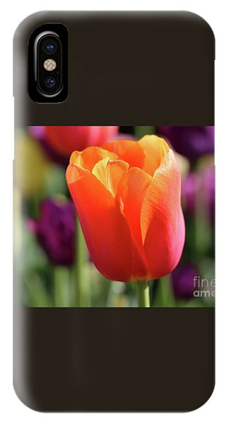 Orange Tulip In Franklin Park IPhone Case