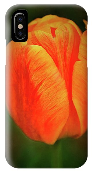 IPhone Case featuring the photograph Orange Tulip Painting Neo Rembrandt Style by Matthias Hauser