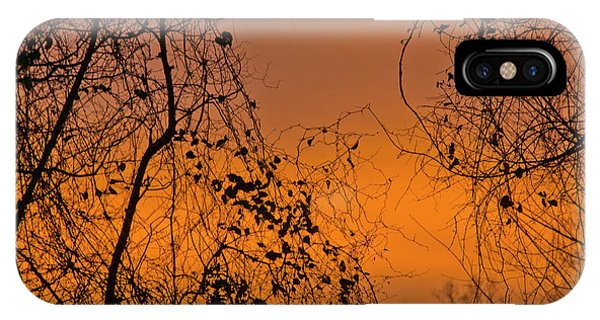IPhone Case featuring the photograph Orange by Wanda Krack