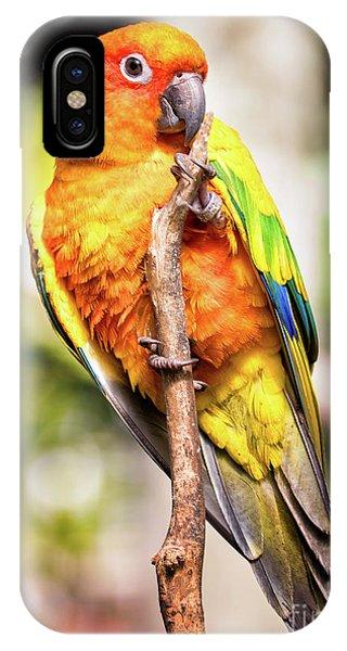 Orange Yellow Parakeet IPhone Case