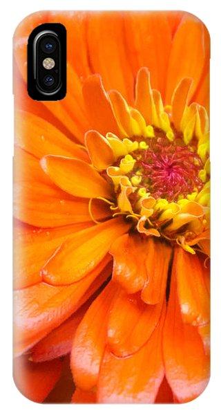 Orange Zinnia After A Rain IPhone Case