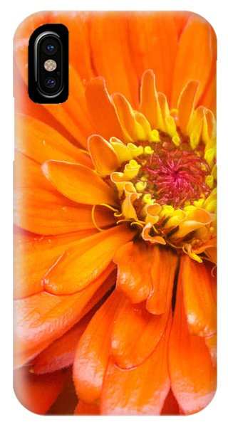 Orange Zinnia After A Rain IPhone Case