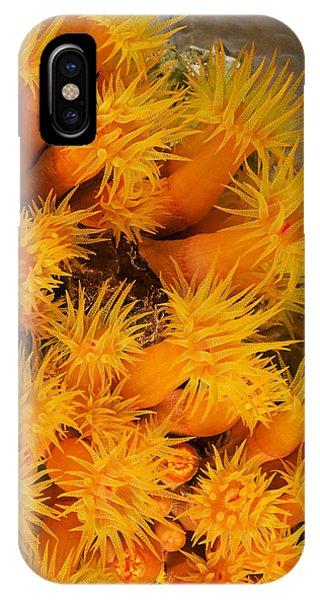 Orangecup Coral IPhone Case