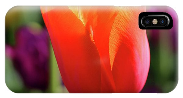 Orange Tulip Square IPhone Case