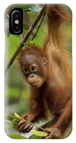Npl iPhone Case - Orangutan Pongo Pygmaeus Baby Swinging by Christophe Courteau