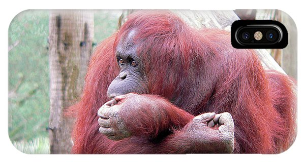 Orangutang Contemplating IPhone Case