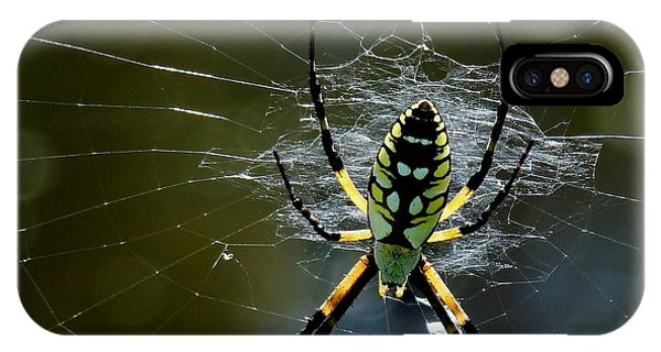 Orb-weaver 2 IPhone Case