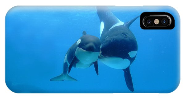Whale iPhone Case - Orca Orcinus Orca Mother And Newborn by Hiroya Minakuchi
